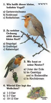 Rotkehlchen - Quiz