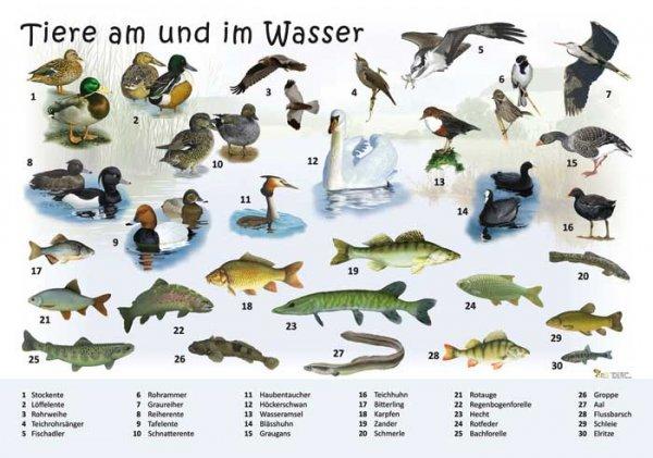 Tiere am und im Wasser