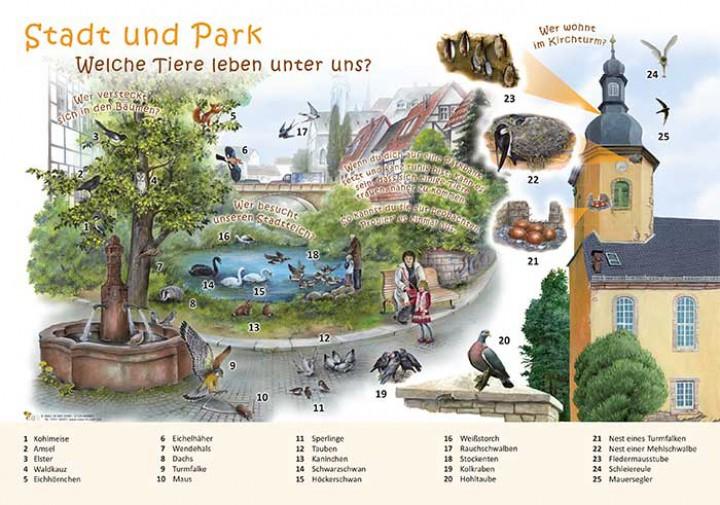 Stadt und park welche tiere leben unter uns 50x70 for Welche tiere fressen algen im teich