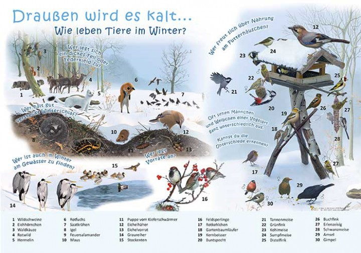 im Winter?  50×70 & 70×100 cm  Ökologie  Lehrtafeln  Natur im