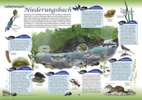 Lebensraum Niederungsbach