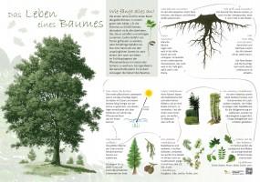 Das Leben eines Baumes
