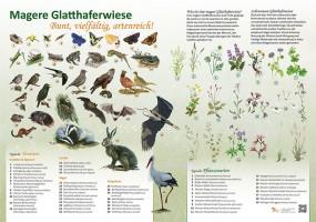 Magere Glatthaferwiese