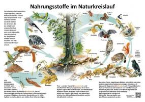 Nahrungsstoffe im Naturkreislauf