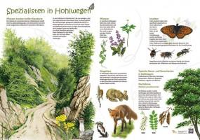 Spezialisten in Hohlwegen