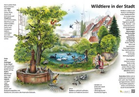 Wildtiere in der Stadt