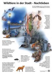 Wildtiere in der Stadt - Nachtleben