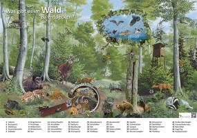Was gibt es im Wald zu entdecken?