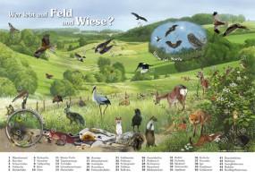 Wer lebt auf Feld und Wiese?