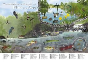 Wer schwimmt und wohnt am Fluss und See?