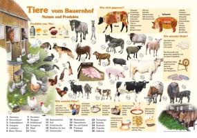 Tiere vom Bauernhof - Nutzen und Produkte
