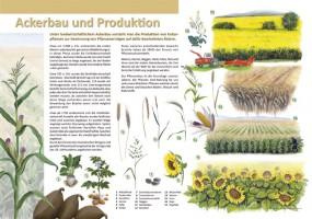Ackerbau und Produktion