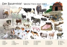 Der Bauernhof - Welche Tiere leben hier?