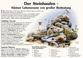 Der Steinhaufen - Kleiner Lebensraum von großer Bedeutung