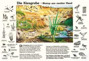 Die Kiesgrube - Biotop aus zweiter Hand