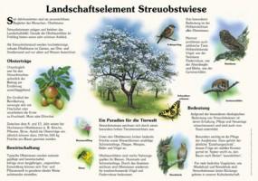 Landschaftselement Streuobstwiese
