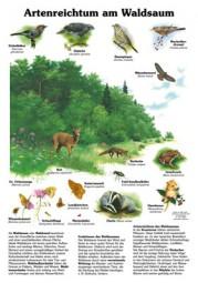 Artenreichtum am Waldsaum