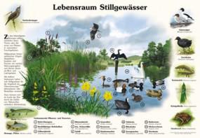 Lebensraum Stillgewässer