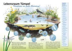 Lebensraum Tümpel