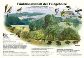 Funktionsvielfalt der Feldgehölze