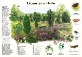 Lebensraum Heide