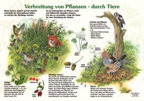 Verbreitung von Pflanzen durch Tiere