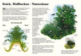 Knick, Wallhecken - Naturzäune