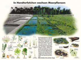 In Handtorfstichen wachsen Moorpflanzen