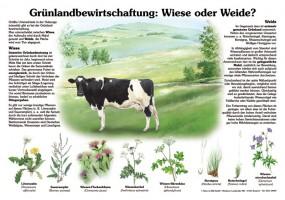 Grünlandbewirtschaftung - Wiese oder Weide
