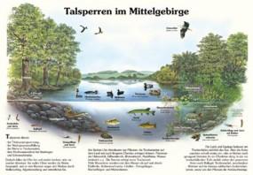 Talsperren im Mittelgebirge