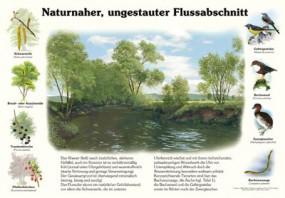 Naturnaher, ungestauter Flussabschnitt