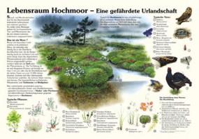 Lebensraum Hochmoor - Eine gefährdete Urlandschaft