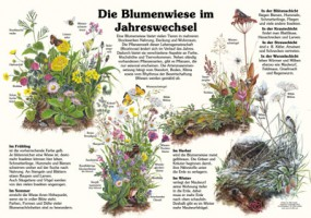 Die Blumenwiese im Jahreswechsel