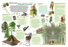 Lebensraum Nadelwald