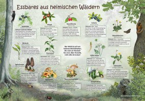 Essbares aus heimischen Wäldern