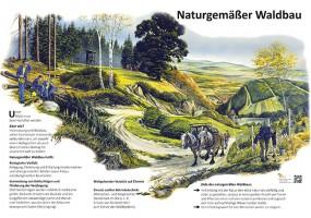 Naturgemäßer Waldbau
