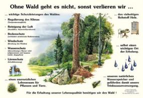 Ohne Wald geht es nicht, sonst verlieren wir ...