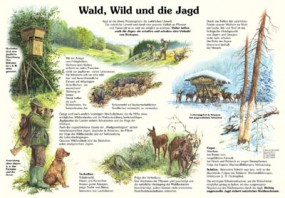 Wald, Wild und die Jagd