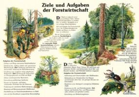 Ziele und Aufgaben der Forstwirtschaft