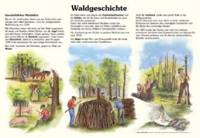 Waldgeschichte