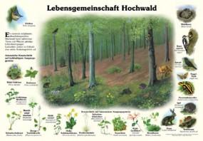 Lebensgemeinschaft Hochwald