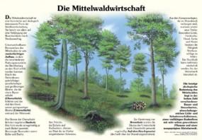 Die Mittelwaldwirtschaft