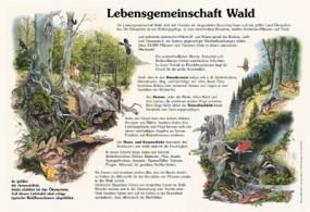 Lebensgemeinschaft Wald