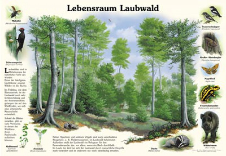 lebensraum laubwald 50x70 amp 70x100 cm wald