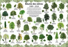 Bäume des Jahres 1989-2018