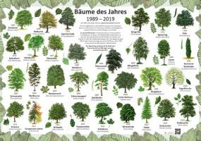 Bäume des Jahres 1989-2019