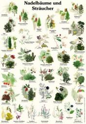 Nadelbäume und Sträucher