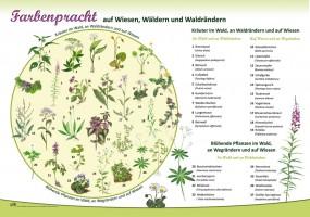 Farbenpracht auf Wiesen, Wäldern und Waldrändern