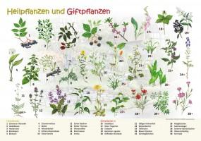 Heilpflanzen und Giftpflanzen