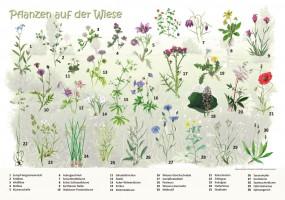 Pflanzen auf der Wiese